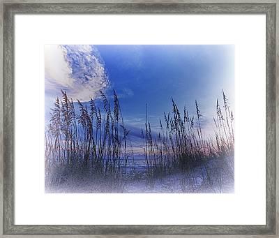 Sea Oats 4 Framed Print by Skip Nall