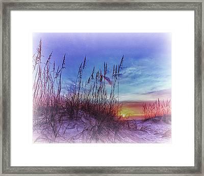 Sea Oats 5 Framed Print by Skip Nall