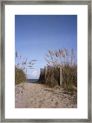 Sea Oats Line The Path Framed Print by Taylor S. Kennedy