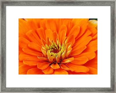 Sea Of Orange Framed Print