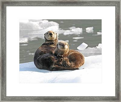 Sea Otter Enhydra Lutris Female Framed Print by Michael Gore
