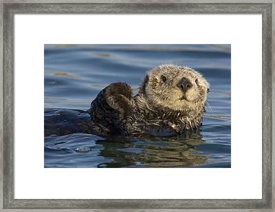 Sea Otter Monterey Bay California Framed Print by Suzi Eszterhas