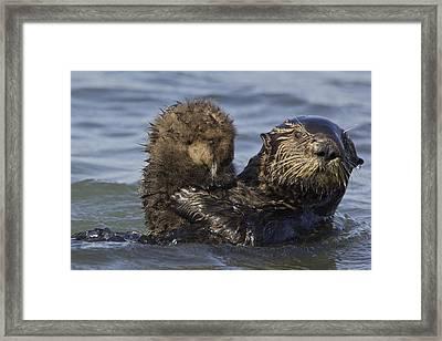 Sea Otter Mother Holding Pup Monterey Framed Print by Suzi Eszterhas