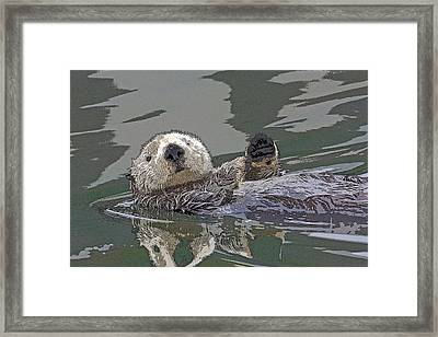 Sea Otter Waving- Abstract Framed Print by Tim Grams
