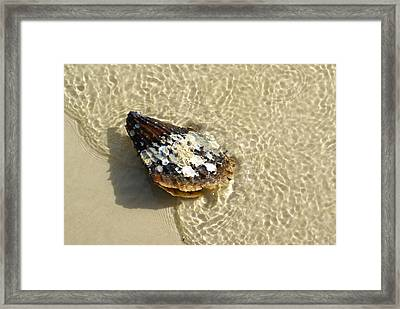 Sea Scallop Ride Framed Print by Florene Welebny
