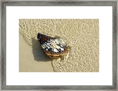 Sea Scallop Ride Framed Print by Florene Welebny