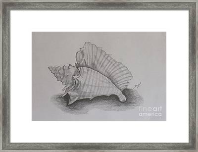 Sea Shell Framed Print by Debra Piro