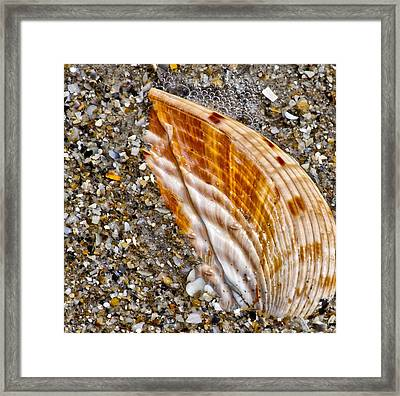 Sea Shell Framed Print