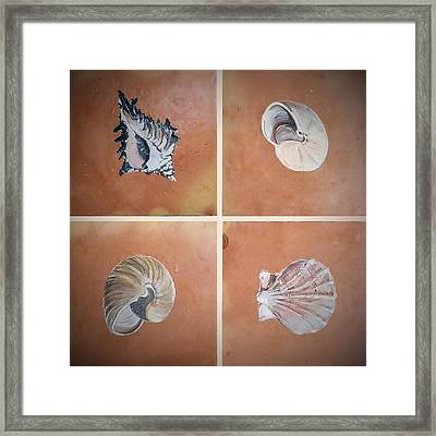 Sea Shells Framed Print by Andrew Drozdowicz