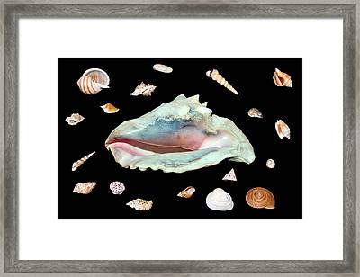Framed Print featuring the photograph Sea Shells by David Lester