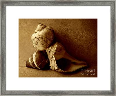 Sea Shells II Sepia Framed Print by Ann Powell