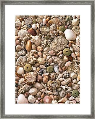Sea Shells  Framed Print by Mauro Celotti