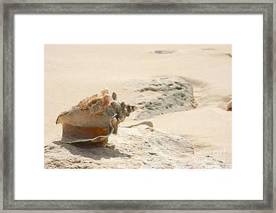 Sea Shells On The Beach. Framed Print by Gal Eitan