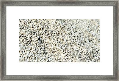 Sea Shells Framed Print by Yew Kwang