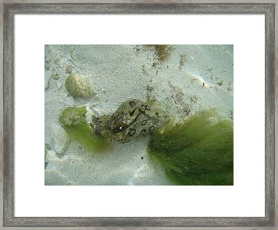Sea Slug Framed Print by Kimberly Perry