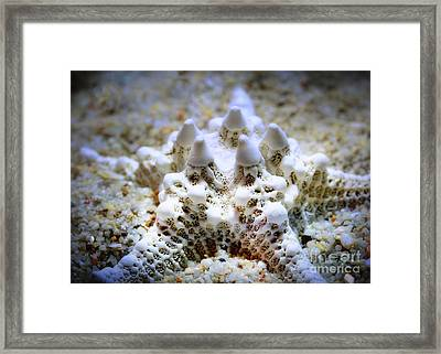 Sea Star Framed Print by Judi Bagwell