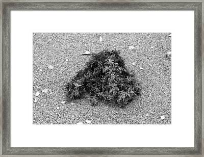 Sea Treasure II Framed Print by Jairo Rodriguez