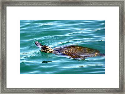 Framed Print featuring the photograph Sea Turtle by Jeanne Andrews