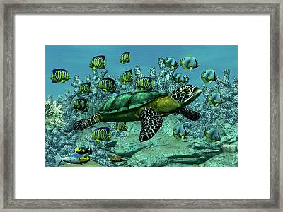 Sea Turtle Framed Print by Walter Colvin
