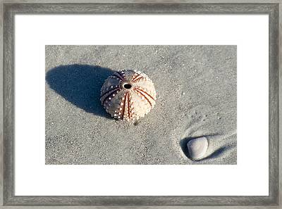 Sea Urchin And Shell Framed Print by Kenneth Albin