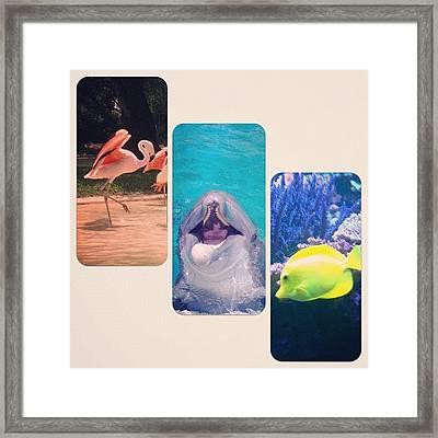 Sea World, San Antonio, Tx Framed Print