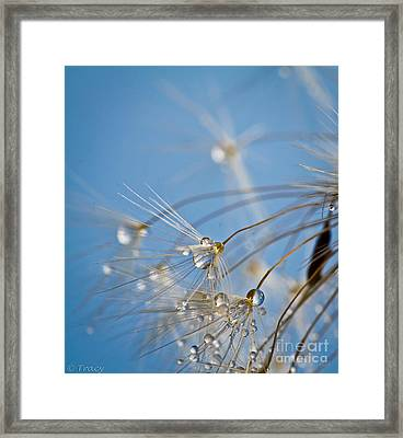 Seabreeze Framed Print by Tracy  Hall