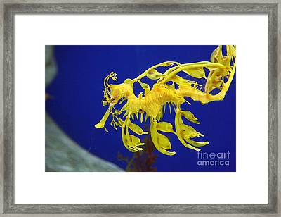 Framed Print featuring the photograph Seadragon by Milena Boeva
