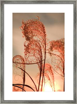 Seagrass Framed Print