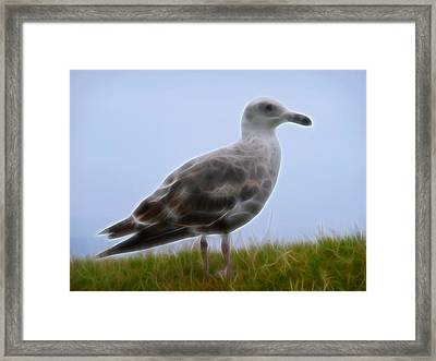 Seagull Abstract Framed Print by Cindy Wright