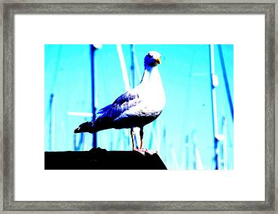 Seagull  Framed Print by Amanda Pillet