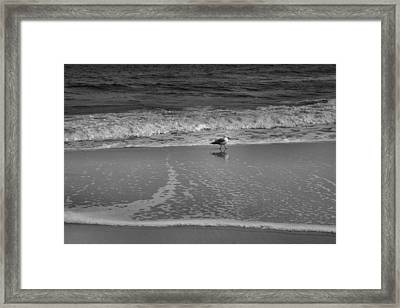 Seagull And Surf Framed Print by Steven Ainsworth
