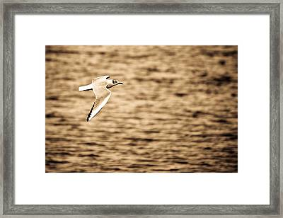 Seagull Antiqued Framed Print