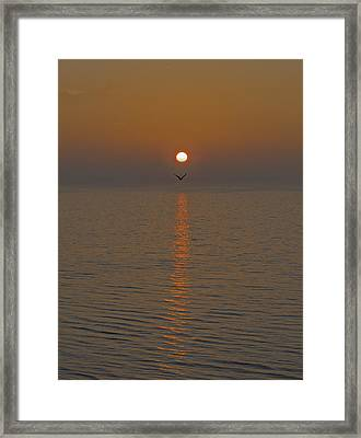 Seagull At First Light Framed Print by Gary Eason