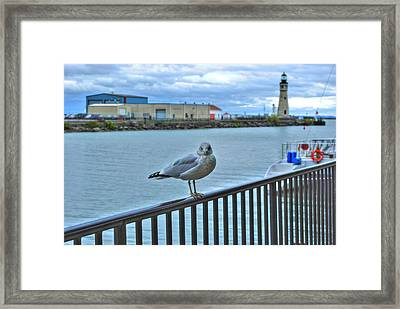 Framed Print featuring the photograph Seagull At Lighthouse by Michael Frank Jr