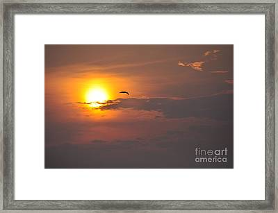 Seagull At Sunset Framed Print by Fred Fishkin