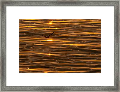 Seagull At Sunset Framed Print by Micael  Carlsson