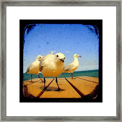 Seagull At The Beach - Ttv  Framed Print by Tracy Milchick