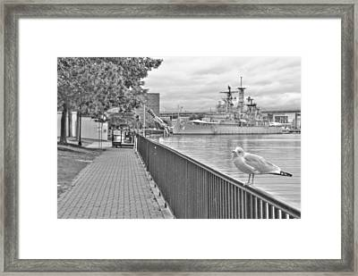 Framed Print featuring the photograph Seagull At The Naval And Military Park by Michael Frank Jr