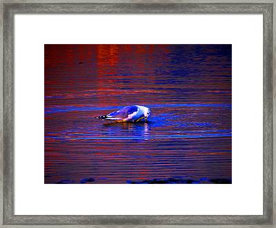 Seagull Bathing In Dramatic Light Framed Print by Catherine Natalia  Roche