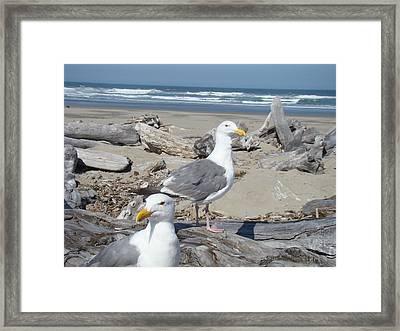 Seagull Bird Art Prints Coastal Beach Bandon Framed Print by Baslee Troutman