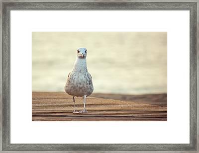 Seagull Framed Print by by Juanedc