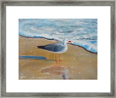 Seagull By The Shore Framed Print by Rita Tortorelli