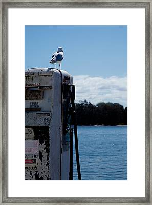 Framed Print featuring the photograph Seagull by Carole Hinding