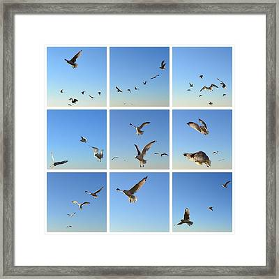 Seagull Collage 2 Framed Print by Michelle Calkins