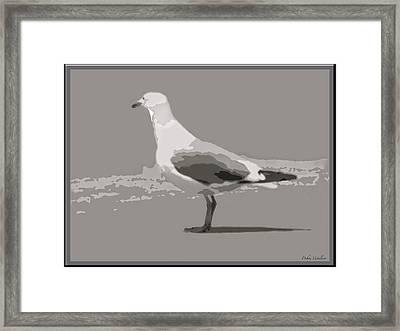 Seagull Framed Print by Debra     Vatalaro