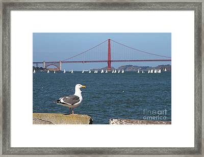 Seagull Enjoying The Sailboats On The San Francisco Bay . 7d14041 Framed Print by Wingsdomain Art and Photography