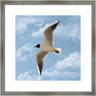 Seagull Flies Alone Under Blue Sky And Cloud Framed Print by Margarete Nazarczuk
