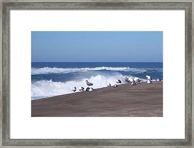Framed Print featuring the photograph Seagull Hang-out by Peter Mooyman