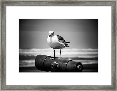 Seagull In Black And White Framed Print