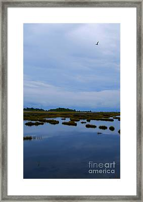 Framed Print featuring the photograph Seagull In Flight by Linda Mesibov